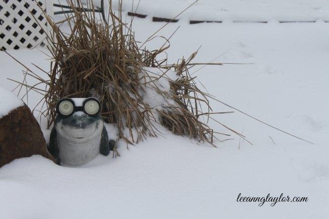 frog in a snowstorm LeeAnn G Taylor