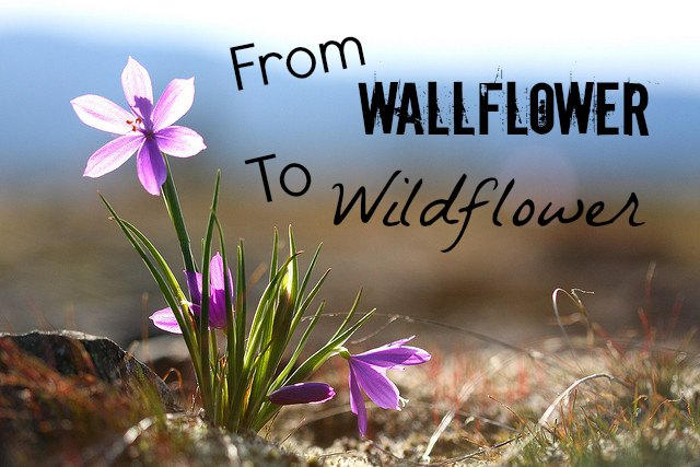 wallflower to wildflower