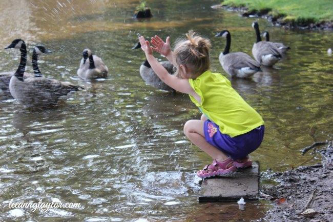 splashing geese